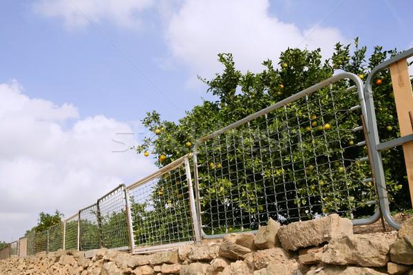 fence on orange tree made of recycled bed structures Stock photo © lunamarina