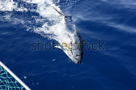 Blue fin tuna Mediterranean fishing and release  Stock photo © lunamarina