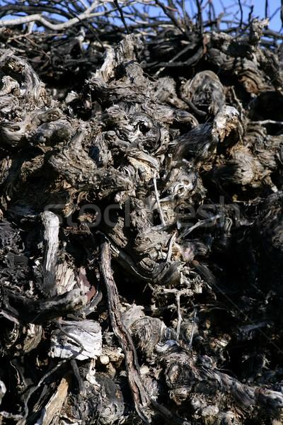 Gedroogd wijngaard brandhout Stockfoto © lunamarina