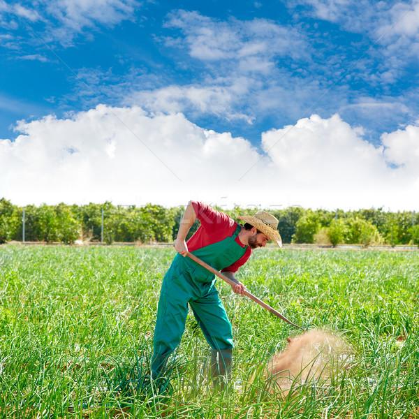 Farmer man working in onion orchard with hoe Stock photo © lunamarina