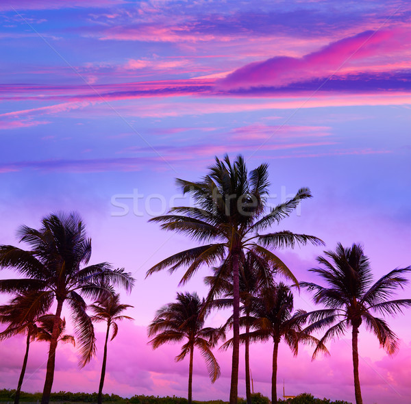 Miami plaj güney gün batımı palmiye ağaçları Florida Stok fotoğraf © lunamarina