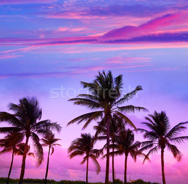 Miami Beach South Beach sunset palm trees Florida Stock photo © lunamarina