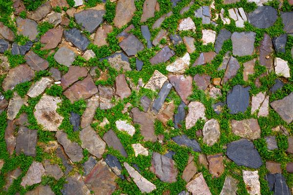 Caceres stones floor detail with grass Spain Stock photo © lunamarina