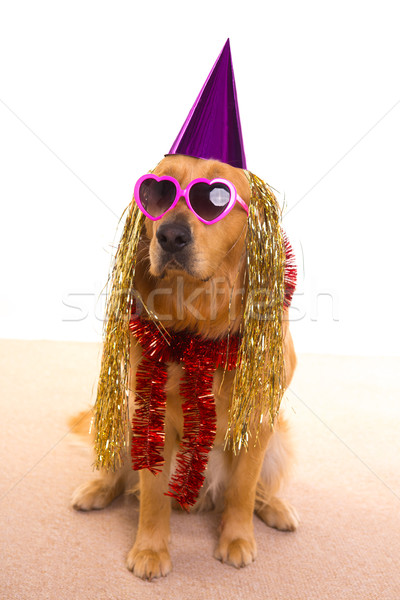 Dog party dressed  purple hat and glasses Stock photo © lunamarina