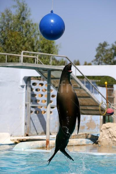 アクロバティック シール ジャンプ 水 を見る ボール ストックフォト © lunamarina