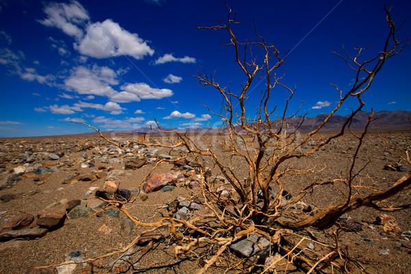 Mort vallée parc Californie séché Photo stock © lunamarina