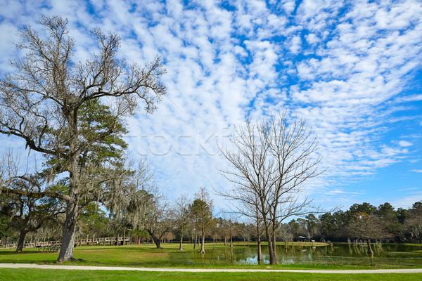 ストックフォト: 公園 · ヒューストン · テキサス州 · 雲 · 自然 · 光