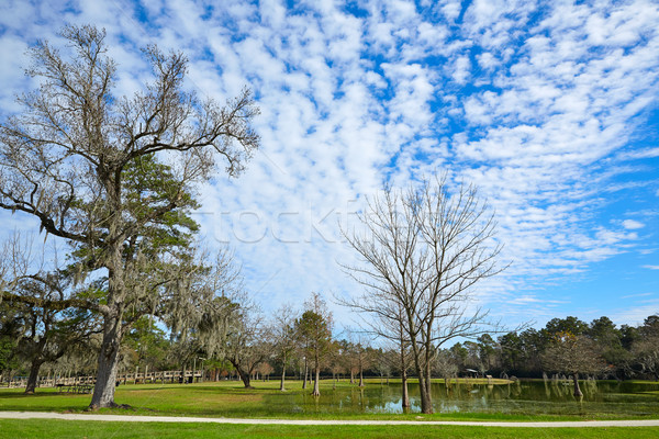 Tomball Burroughs park in Houston Texas Stock photo © lunamarina