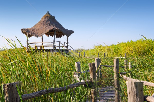 hut palapa in mangrove reed wetlands Stock photo © lunamarina