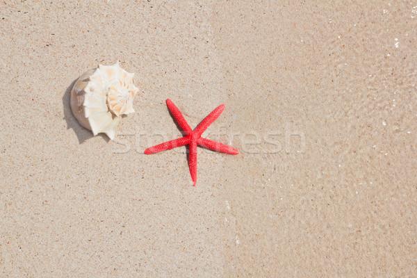 Zdjęcia stock: Rozgwiazda · biały · piasek · plaży · symbolika