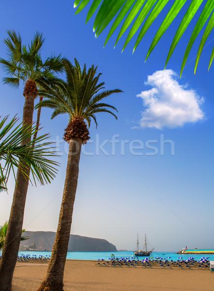 Strand tenerife zuiden boom natuur Stockfoto © lunamarina