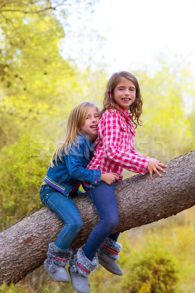 children friends girls climbing to a pine tree trunk Stock photo © lunamarina