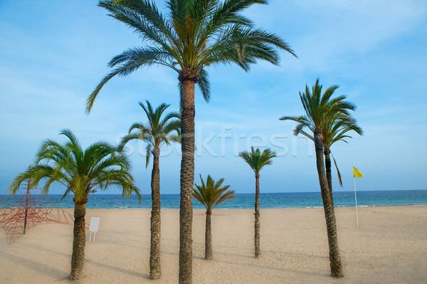 Palmbomen strand middellandse zee stad landschap zee Stockfoto © lunamarina