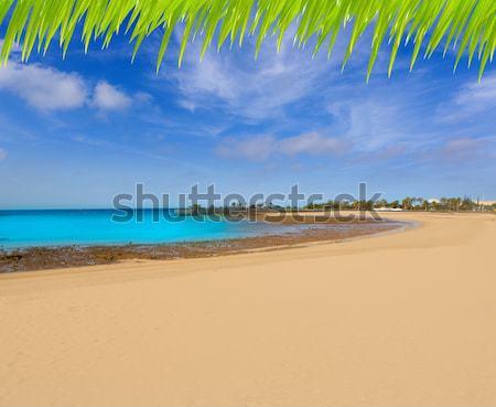 Kust strand zuiden tenerife boom Stockfoto © lunamarina