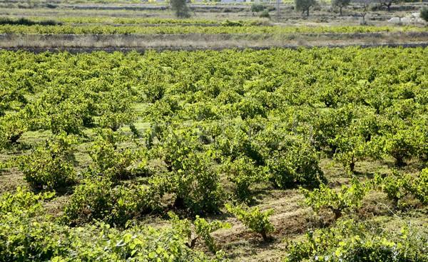 Vineyard, grape fields in mediterranean Spain Stock photo © lunamarina