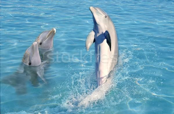 дельфин шоу Карибы воды плаванию стоять Сток-фото © lunamarina