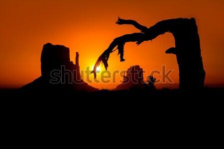 Gündoğumu vadi batı eldiveni kurutulmuş şube Stok fotoğraf © lunamarina