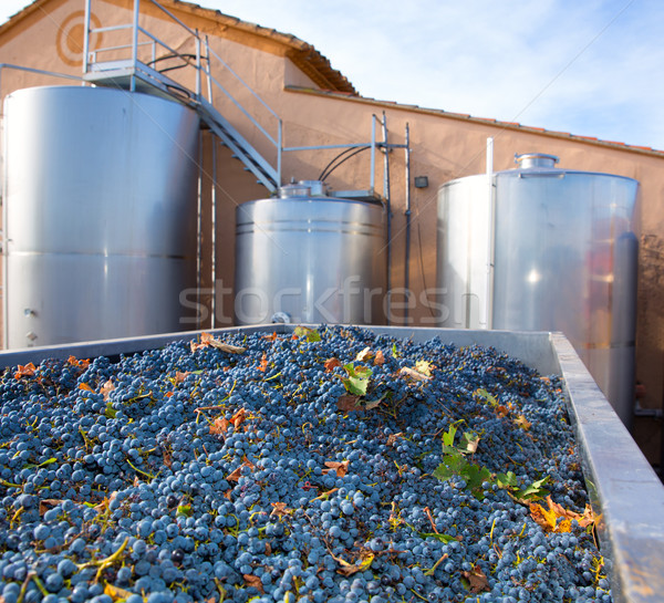Stock photo: cabernet sauvignon winemaking with grapes and tanks