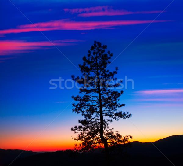 Zonsondergang yosemite national park boom silhouetten Californië USA Stockfoto © lunamarina