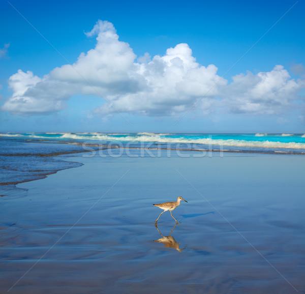 ビーチ フロリダ 米国 水 自然 背景 ストックフォト © lunamarina