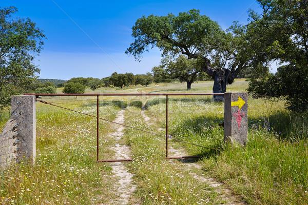 Manera Santiago signo España naturaleza Foto stock © lunamarina