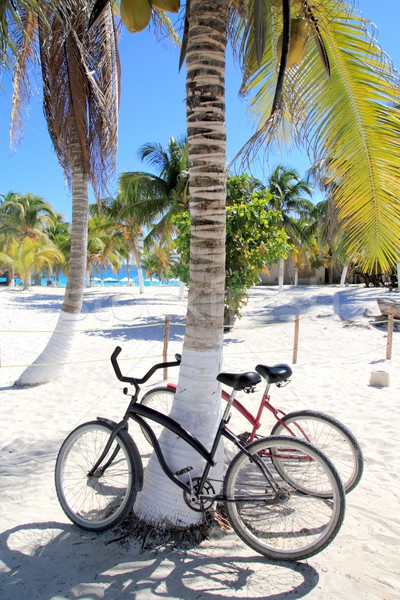 bicycles bike on coconut palm tree caribbean beach  Stock photo © lunamarina