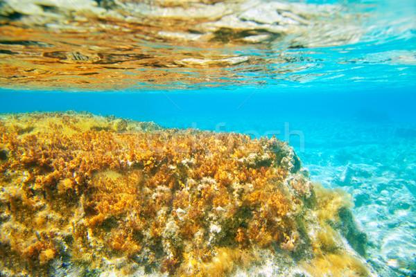 Ibiza Formentera underwater anemone seascape Stock photo © lunamarina