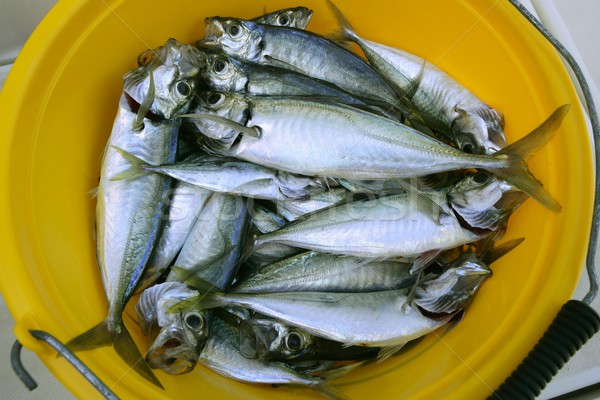 mackerel seafood in yellow pail Stock photo © lunamarina