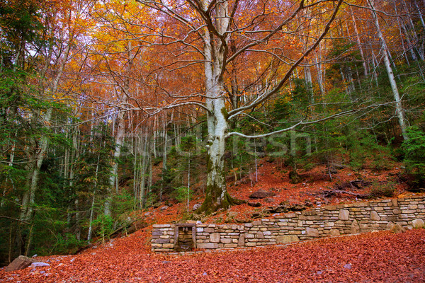 Stock photo: Autumn forest in Pyrenees Valle de Ordesa Huesca Spain