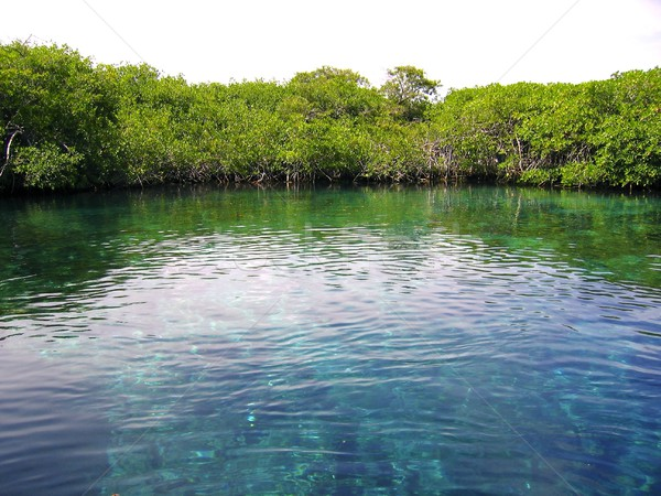 mangrove river in central america mexico Stock photo © lunamarina
