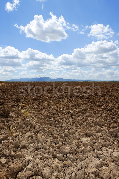 plough plowed brown clay field blue sky horizon Stock photo © lunamarina