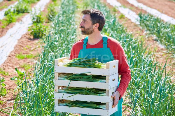 Landbouwer man oogst uien middellandse zee boomgaard Stockfoto © lunamarina