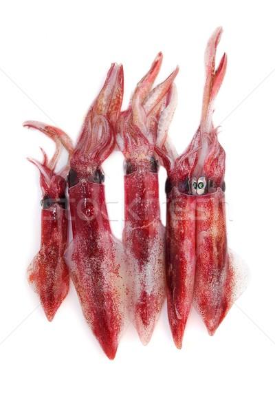 fresh squid Loligo vulgaris seafood catch Stock photo © lunamarina