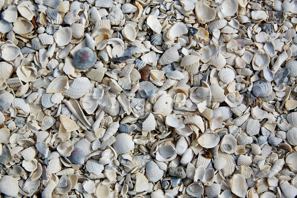 フロリダ 砦 ビーチ 海 シェル 砂 ストックフォト © lunamarina