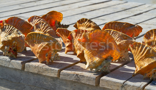 Caribbean seashells on a wooden pier Mexico Stock photo © lunamarina