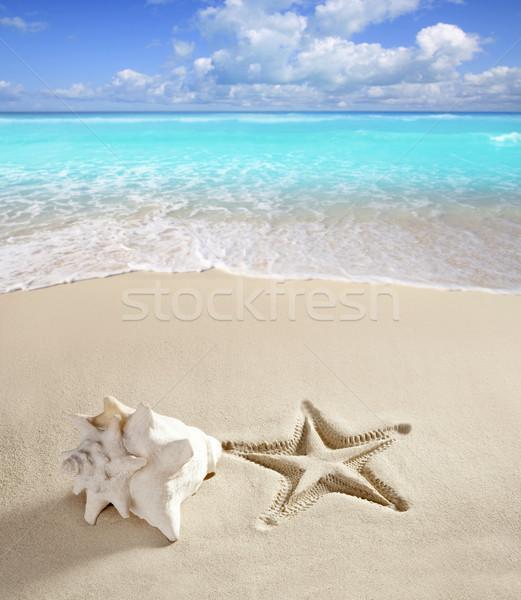 Photo stock: Caraïbes · plage · starfish · imprimer · shell · sable · blanc