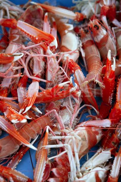Mediterranean crustacean, Nephrops Norvegicus Stock photo © lunamarina