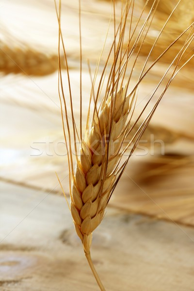 golden wheat cereal, still life Stock photo © lunamarina