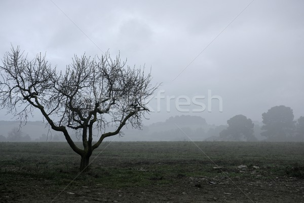 Dried tree vanish into the winter fog Stock photo © lunamarina