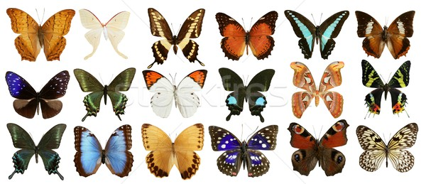 Stock photo: butterflies collection colorful isolated on white