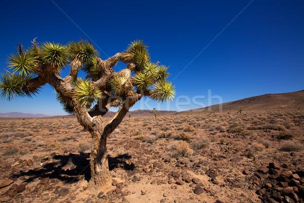 ölüm vadi ağaç bitki Kaliforniya gökyüzü Stok fotoğraf © lunamarina