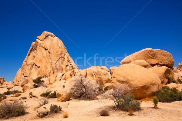 Baum Park Kreuzung rock Kalifornien Wüste Stock foto © lunamarina