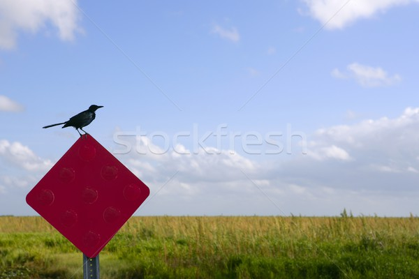 Blackbird standing over traffic red sign in green Everglades  Stock photo © lunamarina