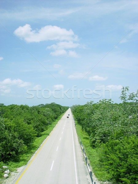 jungle road aerial view central america mexico Stock photo © lunamarina