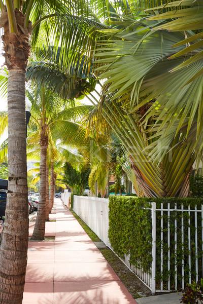 Miami plaj palmiye ağaçları Florida sokak ABD Stok fotoğraf © lunamarina