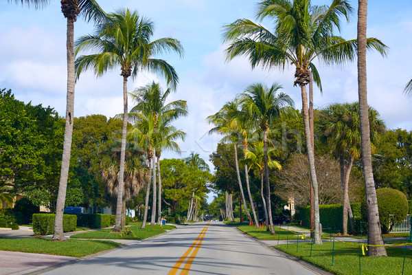 Неаполь пляж улиц пальмами Флорида США Сток-фото © lunamarina