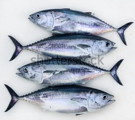 Véres négy tonhal hal zsákmány csetepaté Stock fotó © lunamarina