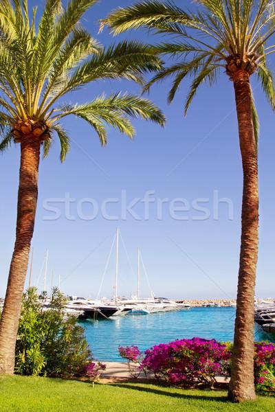 Kert Mallorca kilátás víz fa tenger Stock fotó © lunamarina