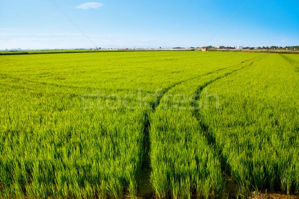 Groen gras rijstveld Spanje Valencia trekker wielen Stockfoto © lunamarina