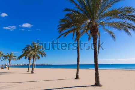 Playa tenerife norte canarias sol Foto stock © lunamarina